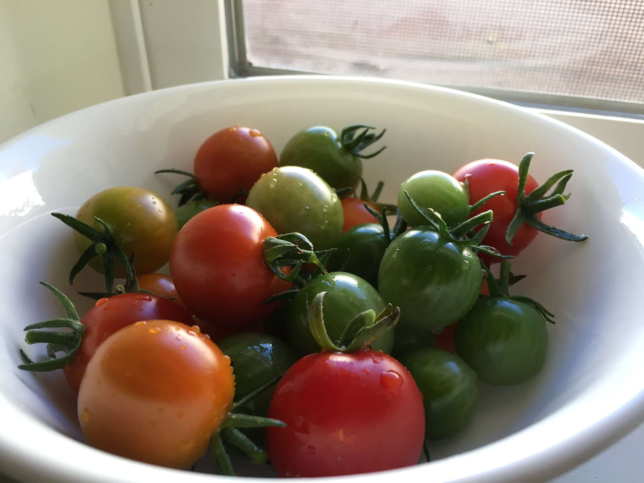 Tomatoes from yard